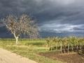 vor-dem-Sturm