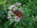 Insekten-(3)